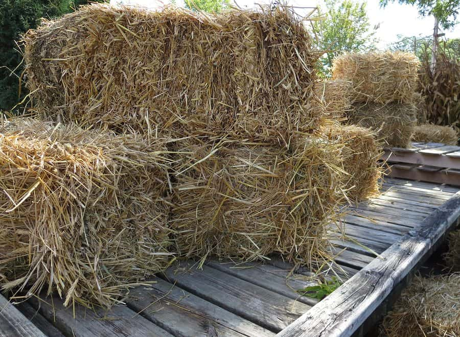 bigstock Close up Hay and Straw Bales o 102194936 - Revisiting the Harvest Hills Hay Ride Tragedy: Trial Expected to Begin Thursday